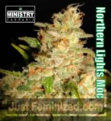 MOC Northern Lights MOC feminized cannabis seeds for sale